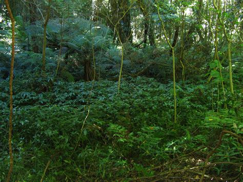 Plants That Live In The Forest Floor by Rainforest Floor By 1the1 On Deviantart