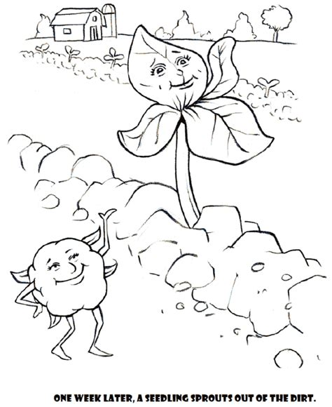Coloring Page Cotton 01 Cotton Coloring Pages