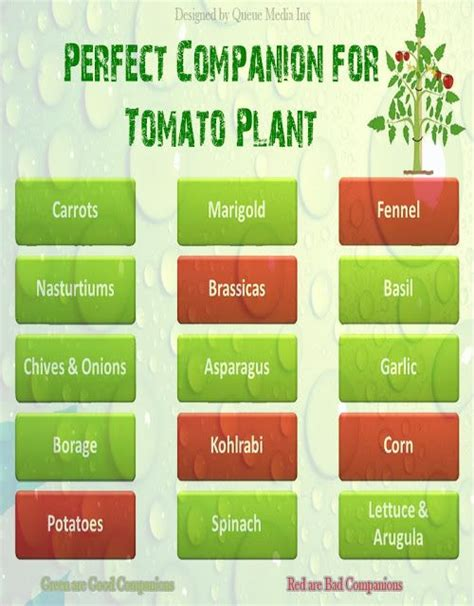1000 ideas about companion planting guide on pinterest 1000 images about companion planting chart on pinterest