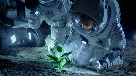 plants grow  space information  horticulture