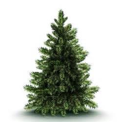 Clipart christmas pine tree royalty free vector design