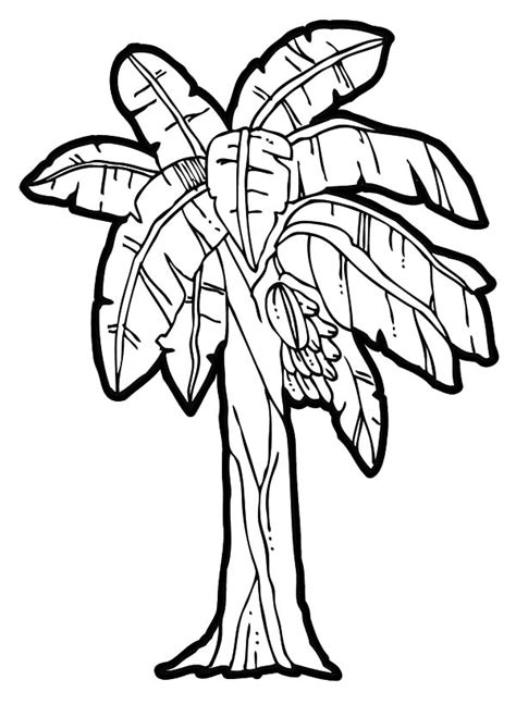 Banana Tree Coloring Page banana tree coloring clipart best
