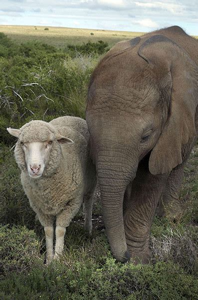 odd africa unlikely animal friendships in pictures life and style