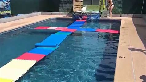 dog boat float pool floats for dogs the best dog 2018