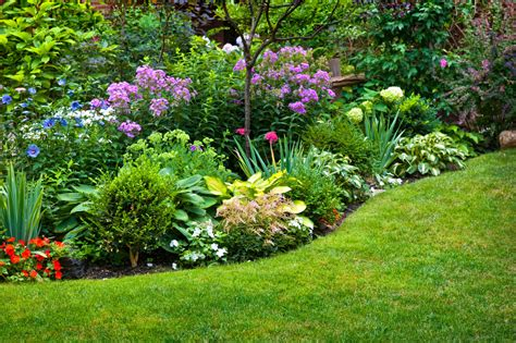 Flowers For Garden Beds Perennial Plant Information What Is Definition Of Perennial Plant