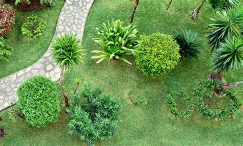 piante da cortile piante che crescono in fretta 5 piante che saranno