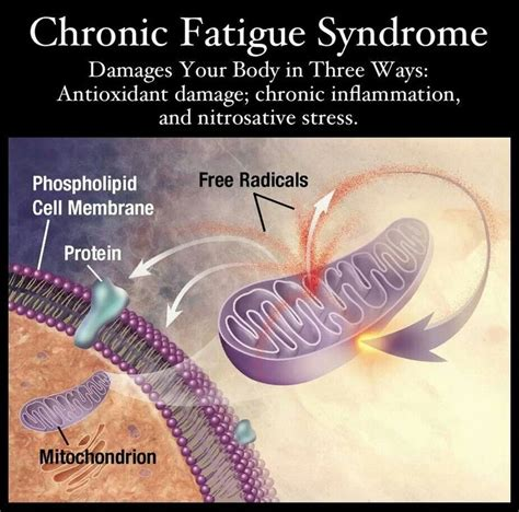 Detox Diet For Chronic Fatigue by 148 Best Images About Lyme Disease Information Dr Sam