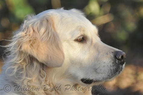 of dogs pictures of dogs william booth photography
