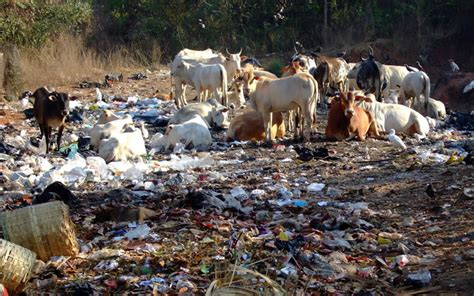 environmental challenges in india environmental pollution in india greentumble