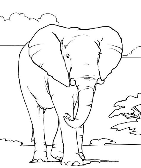 coloring page african animals 1000 images about elephant coloring pages on pinterest