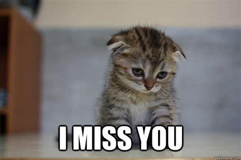 I Miss You Memes - sad kitten memes quickmeme