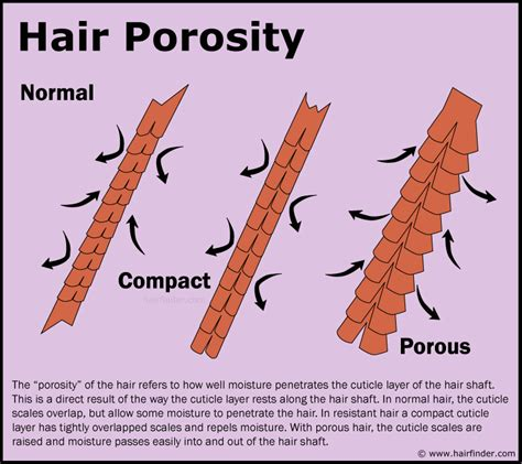 how to take care of the hair cuticle hair porosity and how to determine or measure the porosity