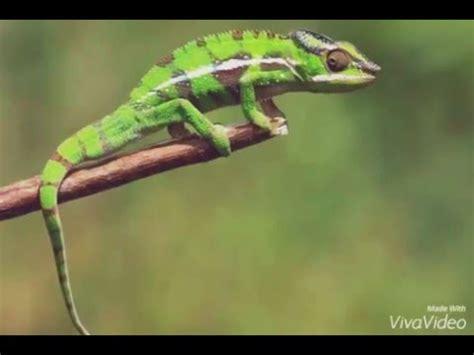 imagenes de animales viviparos animales ovoviv 237 paros youtube