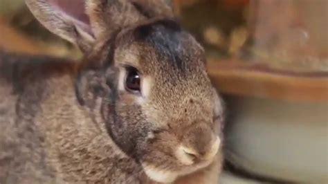 like a bunny what it s like a bunny as a house pet