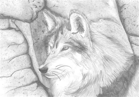 wolves drawings wolf drawing by le0plurad0n on deviantart