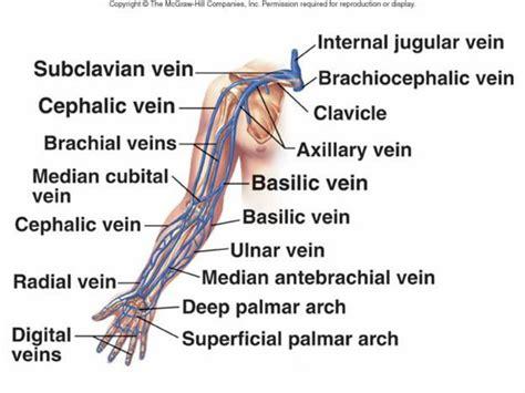 vein diagram of arm veins in the arm diagram anatomy organ