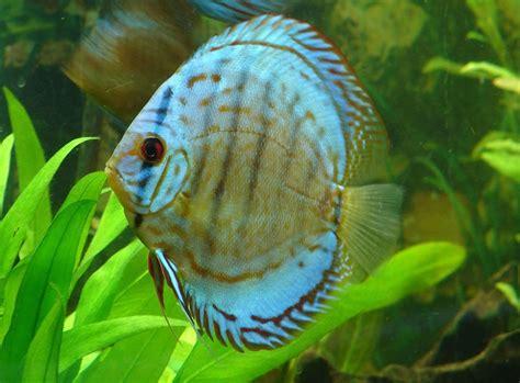 Shrimp Tank Aquascape Cultivating A Healthy Discus Community Tank