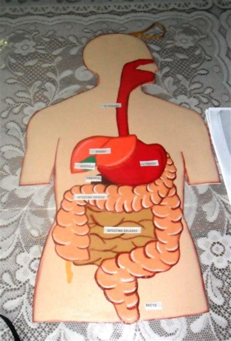 molde para hacer sistema respiratorio con foamy sistema digestivo en foami imagui