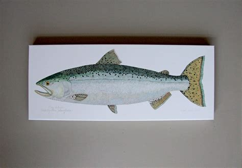 king salmon fly fishing fish print nautical