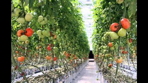 No Till Vegetable Gardening Gardeners Advice No Till Vegetable Gardening