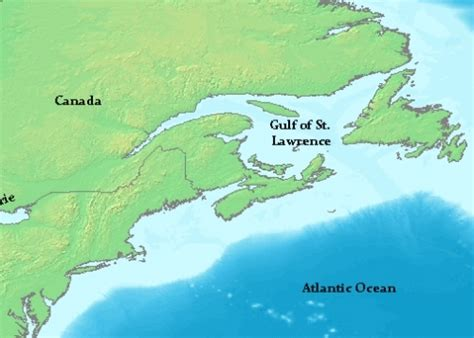 america map gulf of st frontiers of zoology the sturgeon species of ch and nessie