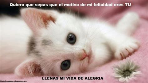 imagenes y videos tiernos para whatsapp im 225 genes de gatitos con frases cortas bonitas para whatsapp