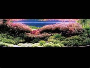Japanese Aquascape Artist Takashi Amano Aquascaping Pinterest