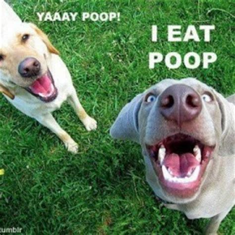 dog behavior pooping in house behavior archives page 2 of 4 new dog owners