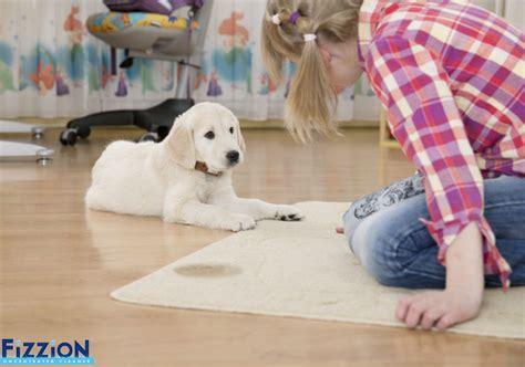 dog urine smell   carpet  trick