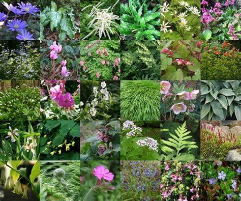 Vaste Planten Border Beplantingsplan by 30 Vaste Planten Voor Een Droge Schaduw Border Border
