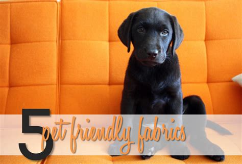 dog friendly upholstery fabric thirty seventh avenue pet friendly fabrics