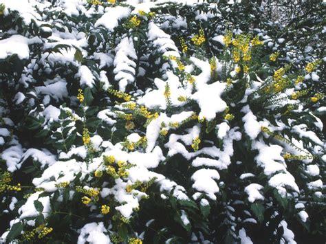 winter gardening plant a winter garden hgtv