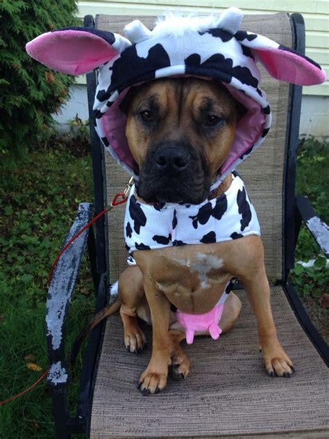 fiona   halloween costume  loves