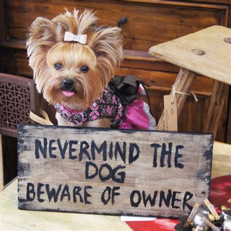 when do yorkies start barking 333 best images about yorkies works of on electric tart warmer