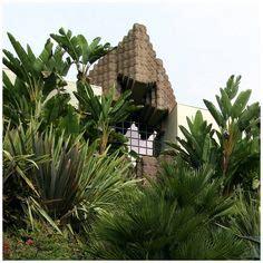 Casa Sanchez Pch - cas and trees on pinterest