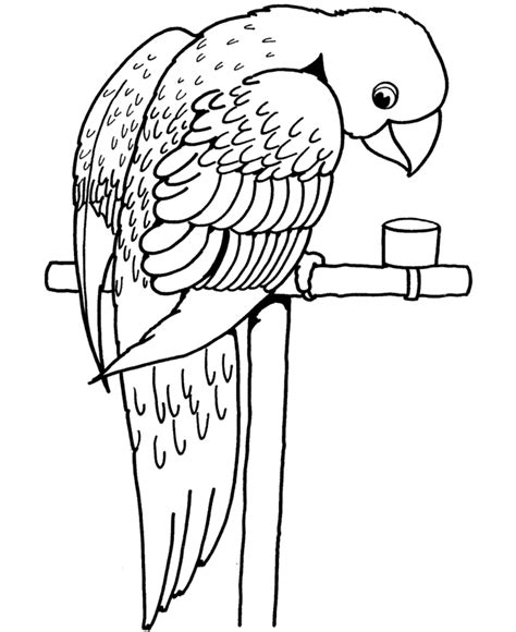 smiley parrot coloring page for kids coloring point