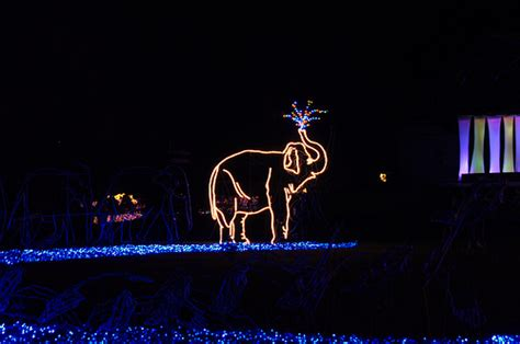 zoo lights oregon oregon zoo lights flickr photo