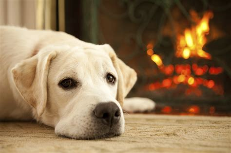 Fireplace Dogs fireplace faq wyckoff heating cooling