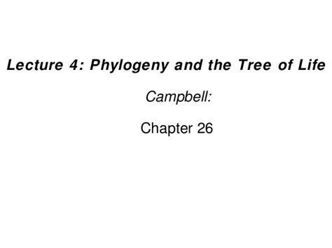 what do trees represent chapter 26 phylogeny and the phylogeny