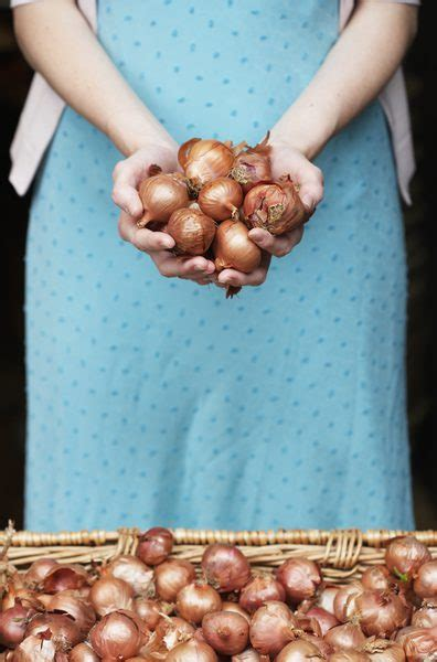are onions toxic to dogs are shallots poisonous to dogs care the daily puppy