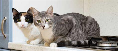katzen aus garten fernhalten katzen fernhalten katzen artgerecht vom garten fernhalten