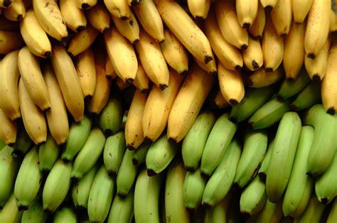 The Bananas banana industry s impact on rainforests business ethics