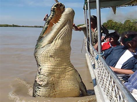 largest in the world top 10 largest crocodiles exploredia