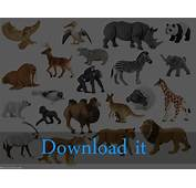 Zoo Animal Pictures