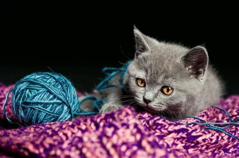 names for gray kittens slideshow