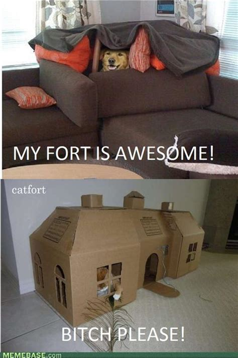 Blanket Fort Meme - my fort is awesome cat meme cat planet cat planet