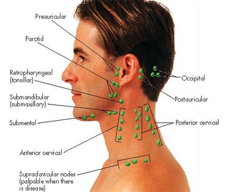 Lymph Node Detox Machine by Best 25 Lymph Nodes Ideas That You Will Like On