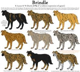 what color is brindle colors guide merle by leonca brown hairs