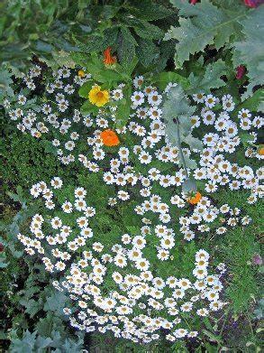 elisia bloemen eliza