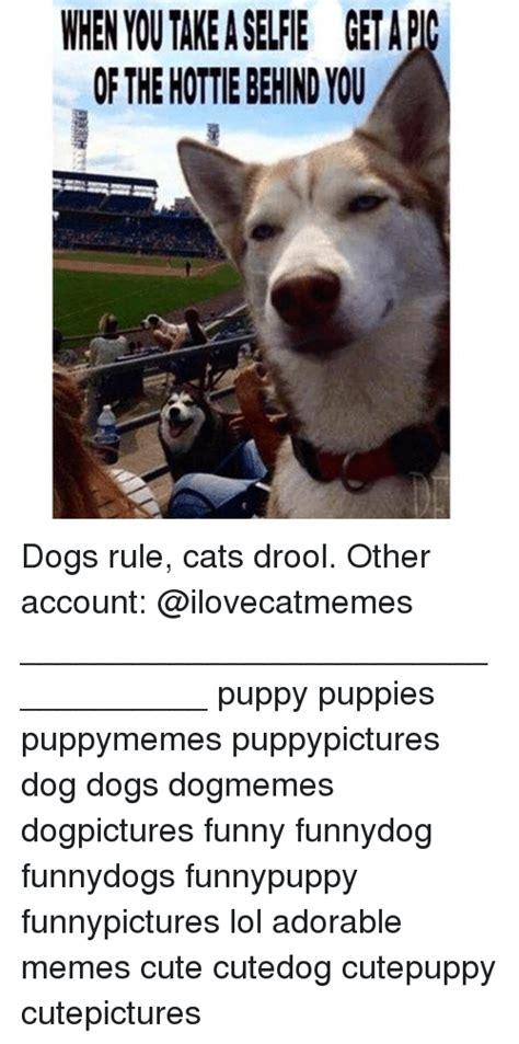 dogs rule dogs meme and puppies memes of 2016 on sizzle